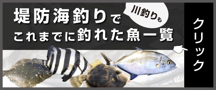 堤防釣りでこれまでに釣れた魚一覧