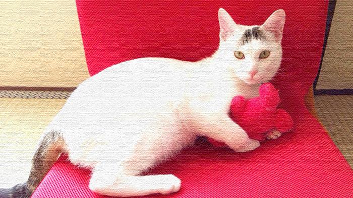 猫は好きですか?僕は好きです!我が家のアイドル大五郎