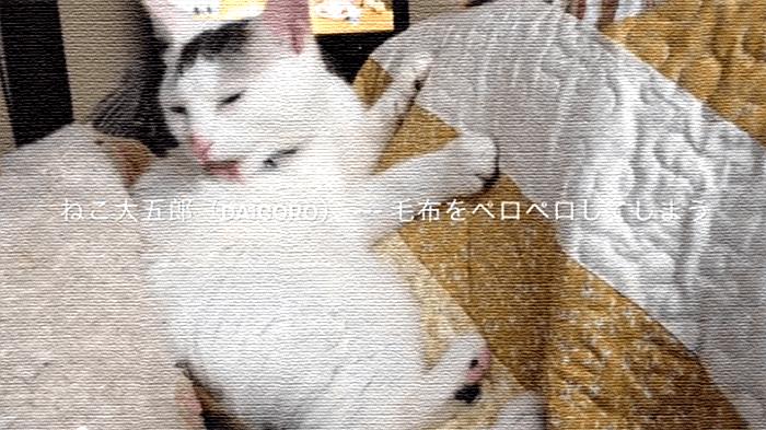 【猫面白動画】体をきれいに舐めていたヅラ猫。でも途中から間違えちゃう。