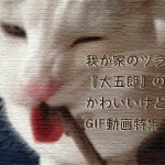 我が家のヅラ猫『大五郎』のかわいいけど目が回るGIF動画特集