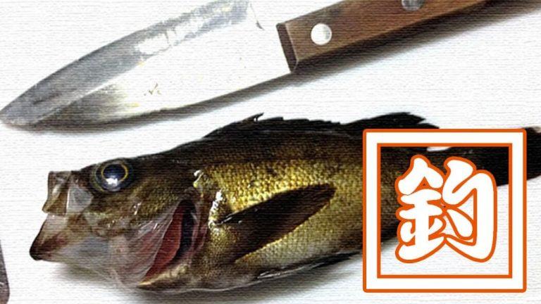 絶品!ギンポの天ぷら!メバル・カサゴ・ベラの刺身と共に食す