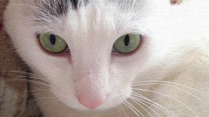 ヅラ猫から皆様にお知らせ。ブログ移行致しました!!