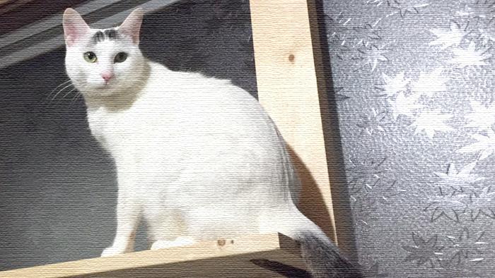 父と母よりヅラ猫にお手製のキャットタワーをプレゼント