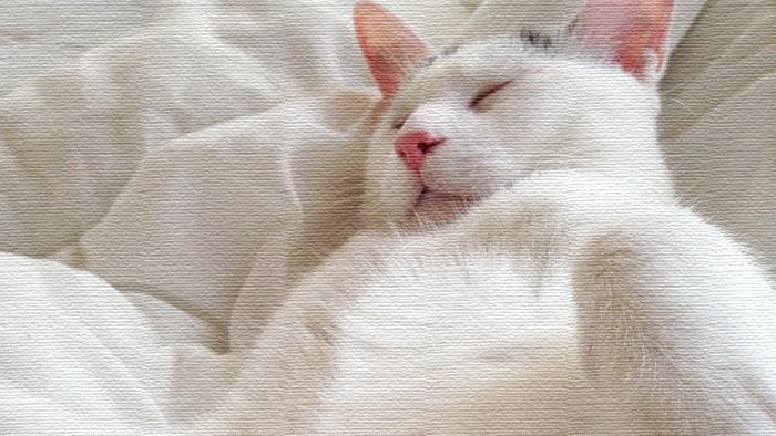 コタツよコタツ、コタツさん。ヅラ猫は貴方に夢中です。