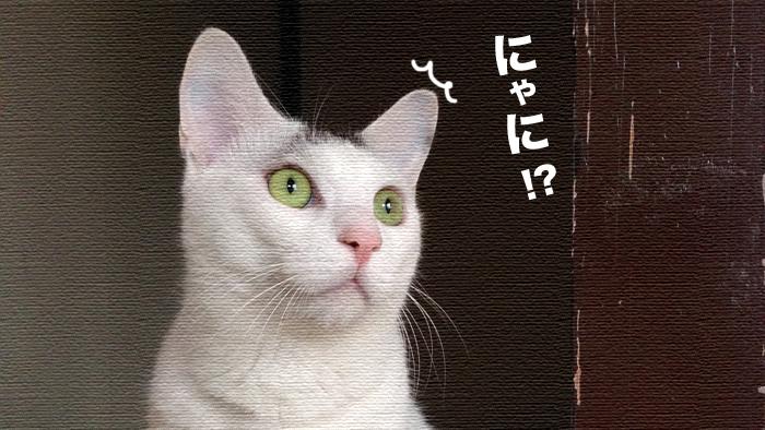 キミは一体何を見た!?ヅラ猫の視線の矛先は…。