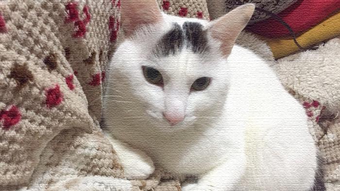 ヅラ猫さん、これってネコ神様からの贈り物かしら?