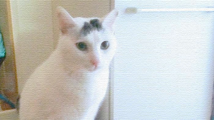 おはようさん!!ヅラ猫さんの朝はここから始まります。