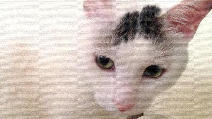 ヅラ猫さん、お手製キャットタワーのその後はいかが?