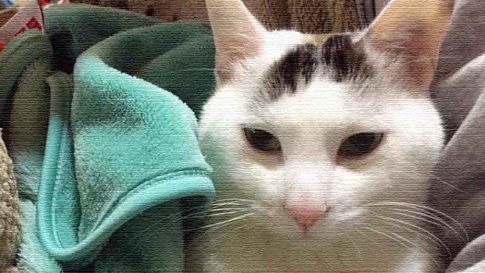 ヅラ猫よりニャンコとすぐ仲良くなれる方法教えちゃう。