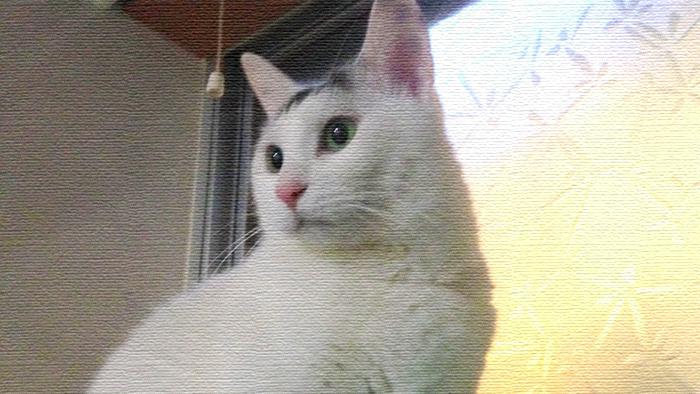 どうしましょう!ヅラ猫のロマンティックが止まらない!