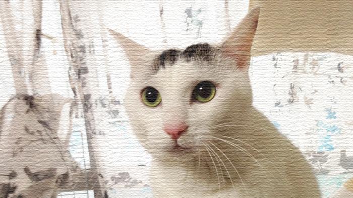 ヅラ猫とわたし。出会うまでのあんなことやこんなこと。