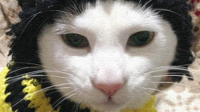 節分ですな。ヅラ猫、今年も鬼五郎となる!!