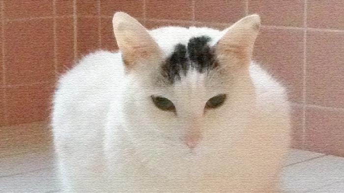 ヅラ猫さん、湯治場で疲れた体を癒しましょう。