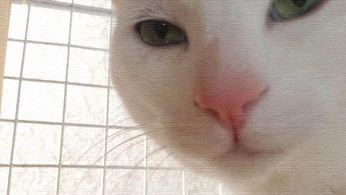 ヅラ猫の母よりお知らせ。テラデマルシェに参加します!