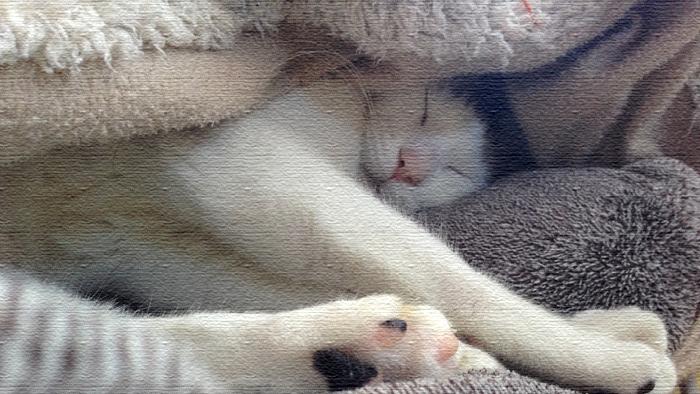 ニャンニャンニャン!ヅラ猫さん今日は猫の日ですよー。
