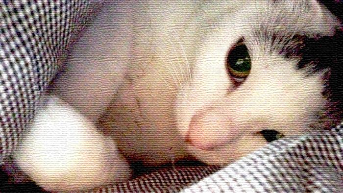 もういいかい?まだだよー。ヅラ猫よドコにいるのかな?