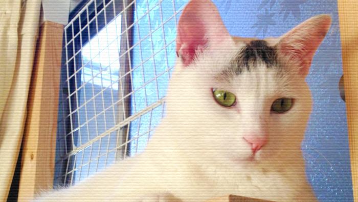世界のキャットタワーから。ヅラ猫の美しい姿をお届け!
