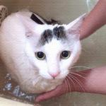 ヅラ猫は一人遊び、母はテラデマルシェに行ってきたよ。