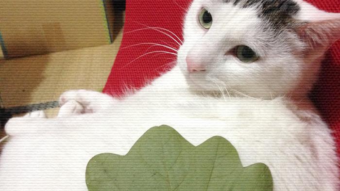 ヅラ猫のお腹はポヨポヨだから母は悪いことを考えた。