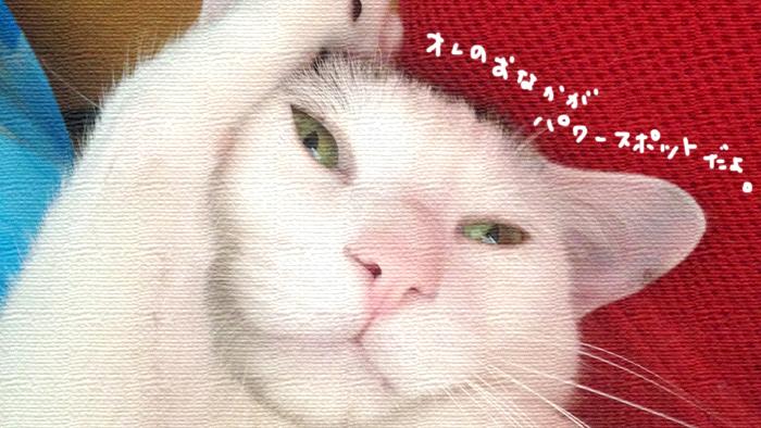 パワースポットには猫がいる!手作り市で出会ったニャンコ
