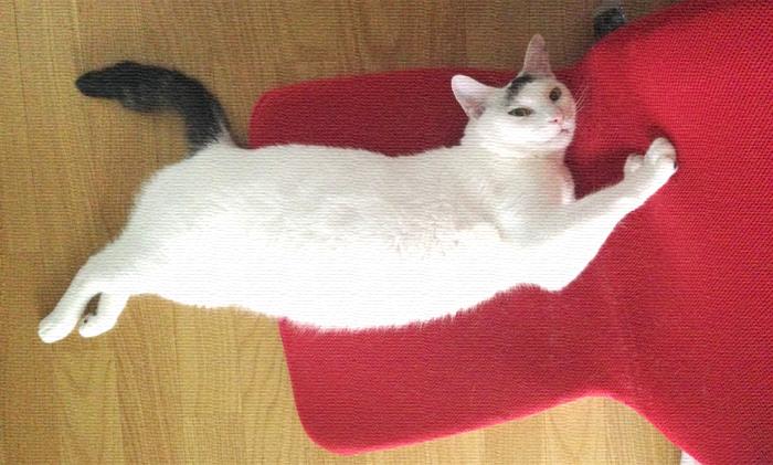 ルドルフとイッパイアッテナを観てきたらヅラ猫に無性に 会いたくなったよ。