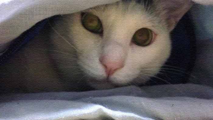 シャカシャカ音がするのが良い!寝袋が大好きなヅラ猫。