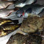 千葉県内房での堤防釣り!カワハギ・メバル・グレを刺身と網焼きに