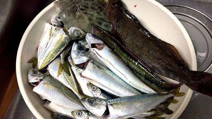 釣ったアイナメとカワハギを鍋に!寒い時期にはオススメの鍋|絶品釣りメシ