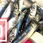 千葉館山堤防冬釣りでマイワシ・サッパ入れ食い!夜釣りではガザミも!!
