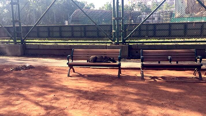 屋外カラオケに太極拳!青年公園で台湾地元民の朝に触れてみた【台北旅行】