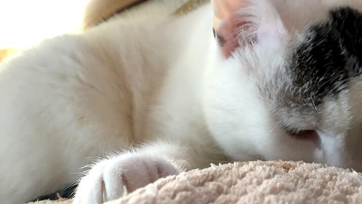 猫が膝の上で寝る理由って?嬉しさと重さの狭間で揺れる心