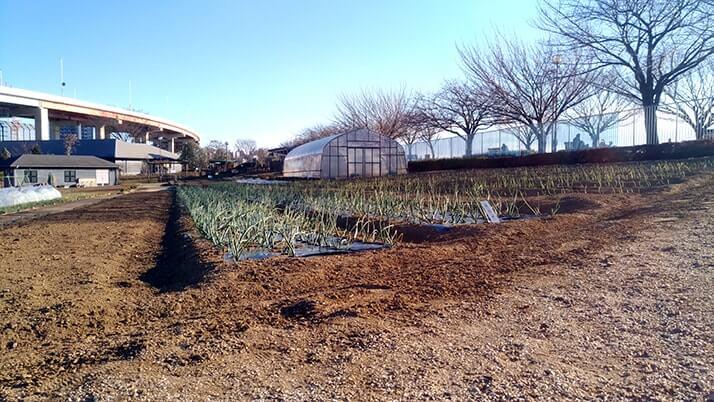 足立の都市農業公園|古民家・熱帯温室もある家族連れにおすすめの公園