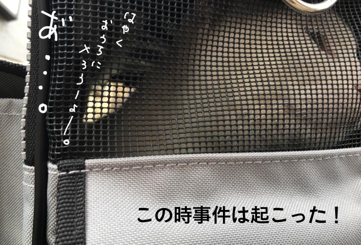 ヅラネコ健康診断帰り、事件勃発!!