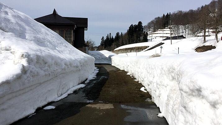 背の丈ほどの雪が残る津南町の信濃川沿いを散歩【新潟旅行】