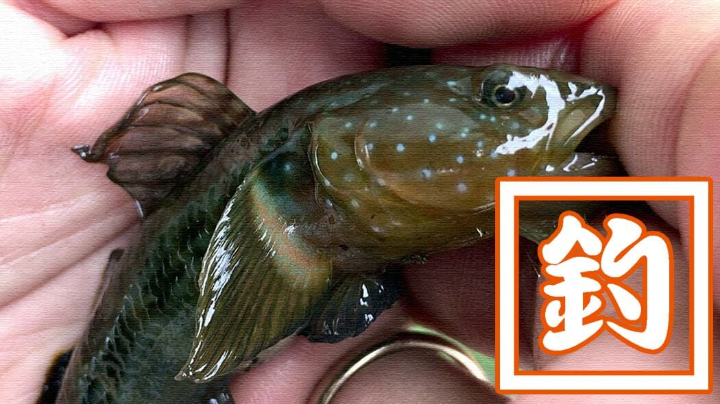 海釣りへの気持ちを抑えるために…東京都内川釣りでお手軽遊び