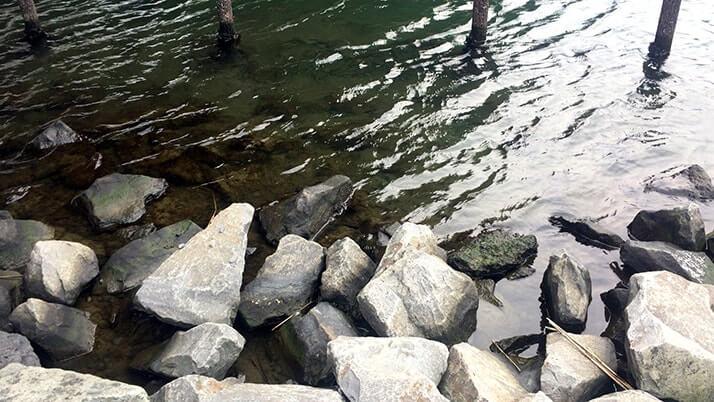 塩辛を餌に春の釣り!旧中川でダボハゼに遊んでもらいました