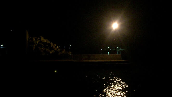 マダコが釣れた!千葉館山堤防でエギにイワシを巻いてタコ釣り