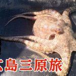 「三原やっさタコ」料理で絶品蛸三昧!タコ刺し・タコ天・タコ飯!【広島三原旅】