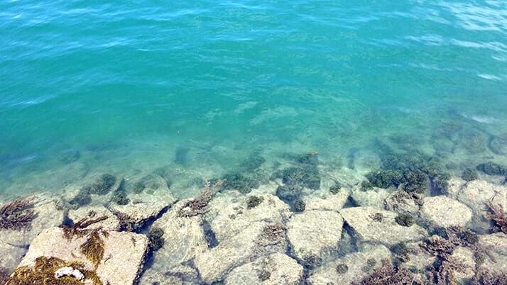 瀬戸内の離島「佐木島」3時間観光|美しいビーチが素敵すぎる島【広島三原旅】