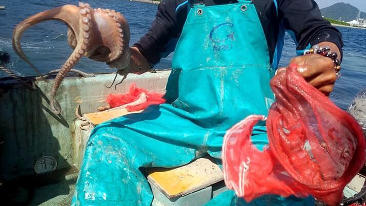 タコつぼ漁体験!広島三原の伝統蛸壺漁を間近で見る興奮