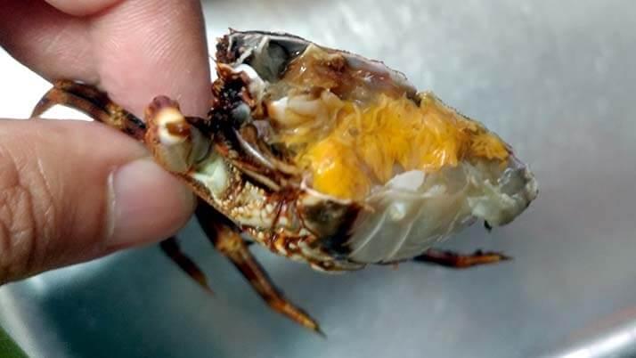 釣ったアナゴで煮穴子と白焼きのあいのせ重!ショウジンガニとカワハギの味噌汁も