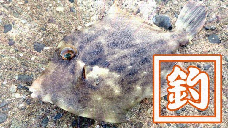 千葉内房堤防夜釣り!メバルにカワハギが釣れるも小物…大物はアカエイ
