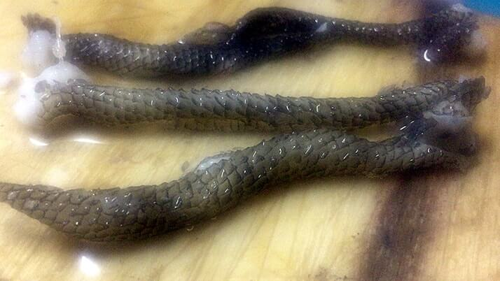 釣ったムラソイで刺身とネギトロ!皮は湯引きにしてポン酢で【釣り飯】
