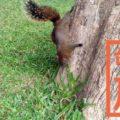台中公園|リスに鳥、人が集う都会のオアシスで旅の休憩!