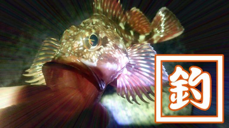 穴釣りでメバルにカサゴ!千葉内房堤防で夜釣りからの朝まずめ狙い