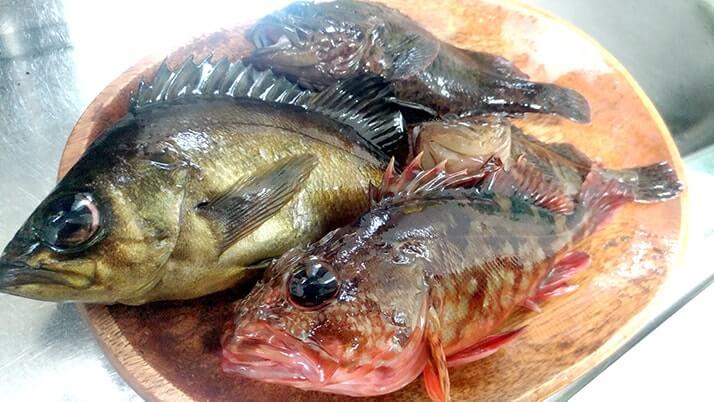 釣ってきたムラソイを味噌汁に!フンドーキンで魚本来の味を引き出す?【釣りメシ】