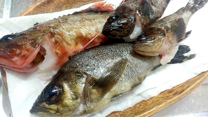 釣ってきたメバルとカサゴで煮つけ!【釣りメシ】