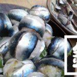 千葉外房堤防で釣った小サバをしめ鯖の手毬寿司と干物に!【釣りメシ】