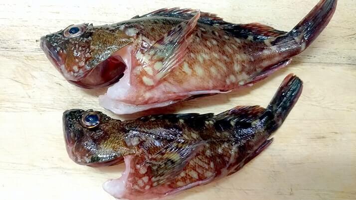 釣ったカサゴを素揚げに!骨まで食べるためのさばき方を試してみた