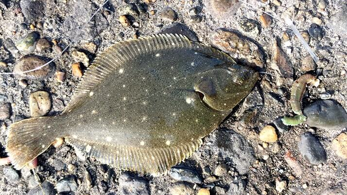 堤防海釣りで釣れる魚まとめ!写真付きで危険魚や毒魚も紹介(川釣りも)
